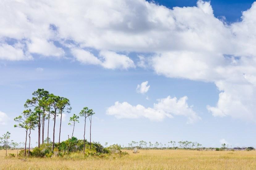 American Grasslands part 2