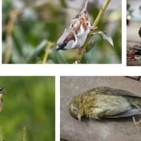 Deutschlands Vögel gefährdet
