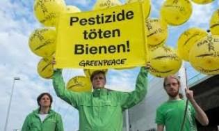 Pestizide töten Bienen