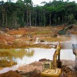 Abrodung der Wälder