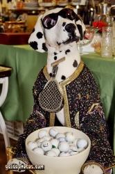 Flohmarktfotos - Hund mit Golfbällen
