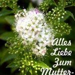 Muttertagskarte - weiße Blüte