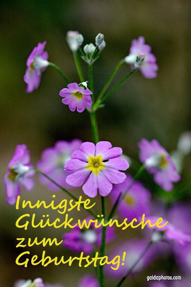 Geburtstagskarte mit lila Blüten