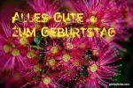 Alles Gute zum Geburtstag Karte kostenlos - Eisenbaumblüte