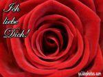 Rote Rose mit Ich liebe Dich Text
