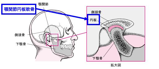 顎関節円板軟骨