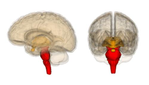 脳幹=完全脳の理論