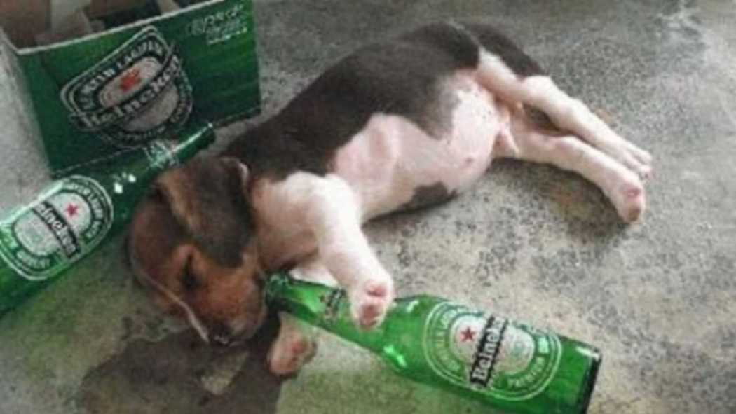 drunk_dog.png