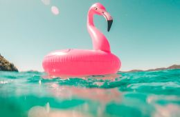 a flamingo in a pool