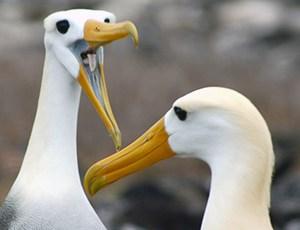 albatross main picture