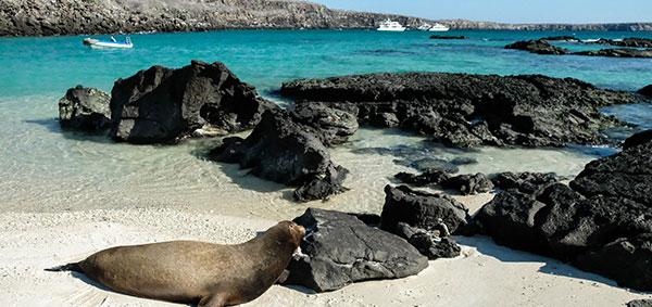beach volcanic island