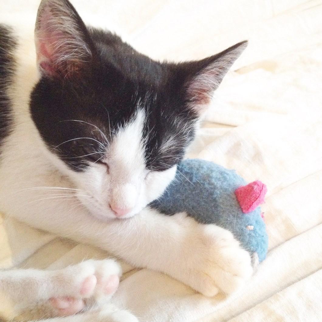 J'ai adopté un chat dans un refuge : l'histoire de Sacha