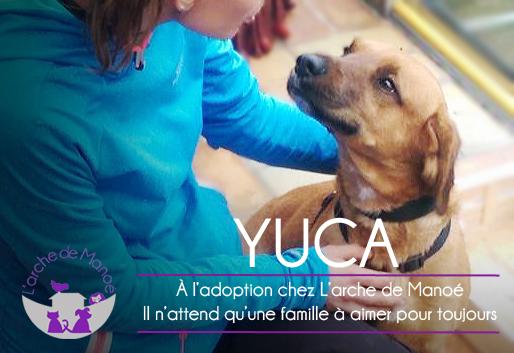 YUCA2