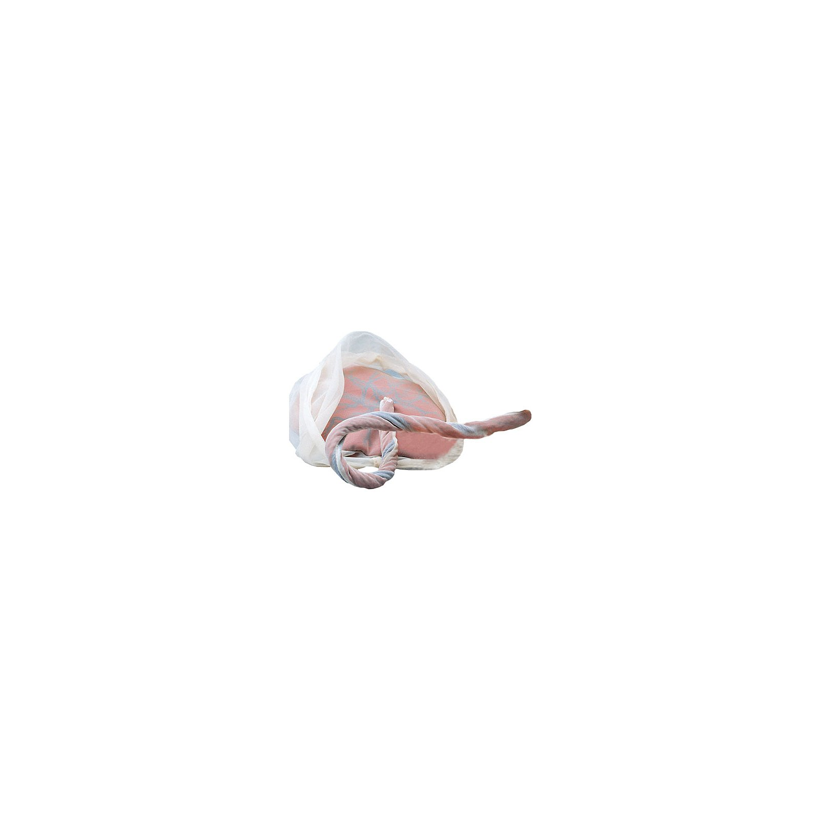 Model of Placenta & Umbilical Cord WRS 79807 R10071 W43039 ...