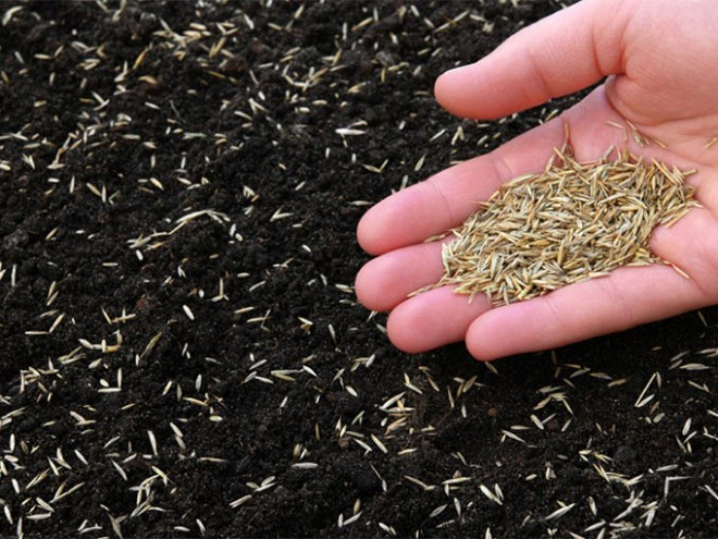Lawn Seeding Service