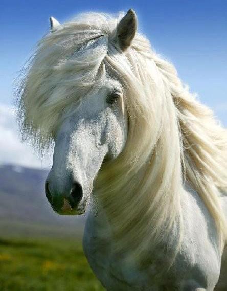 Birbirinden güzel at resimleri