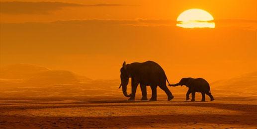 Wandbilder Afrika Leinwandbilder Afrika
