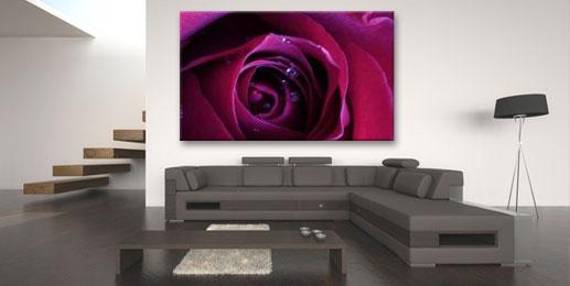 Wandbilder Rosen Leinwandbilder Rosen