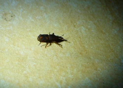 latest petit insecte noir dans la maison with bete d humidit maison