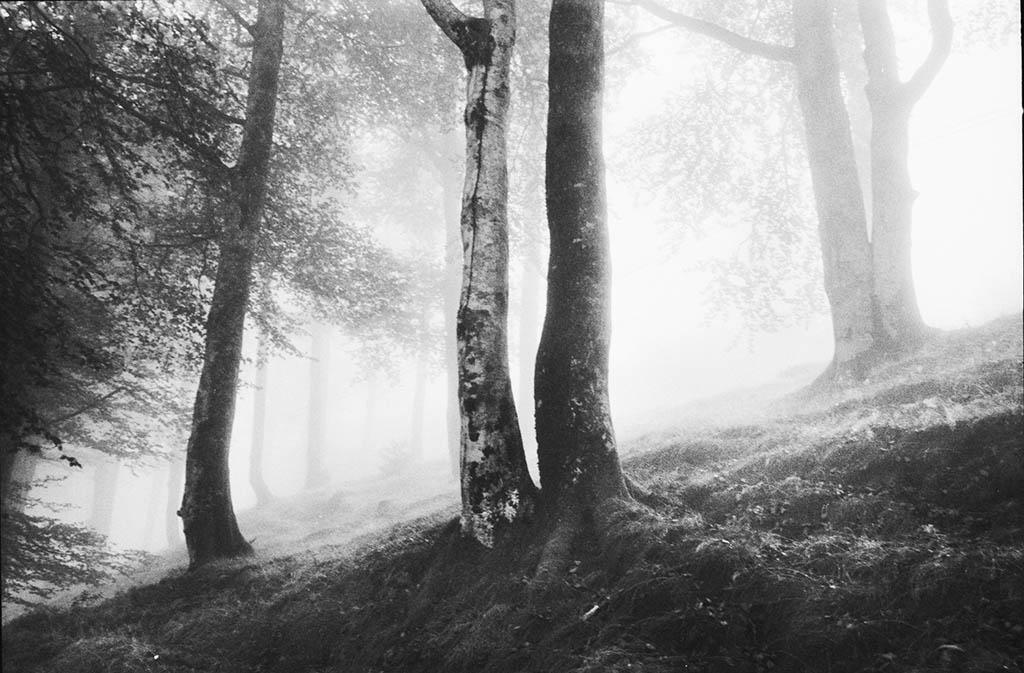 Forêt, Pays Basque, 2003 © Gabrielle Duplantier