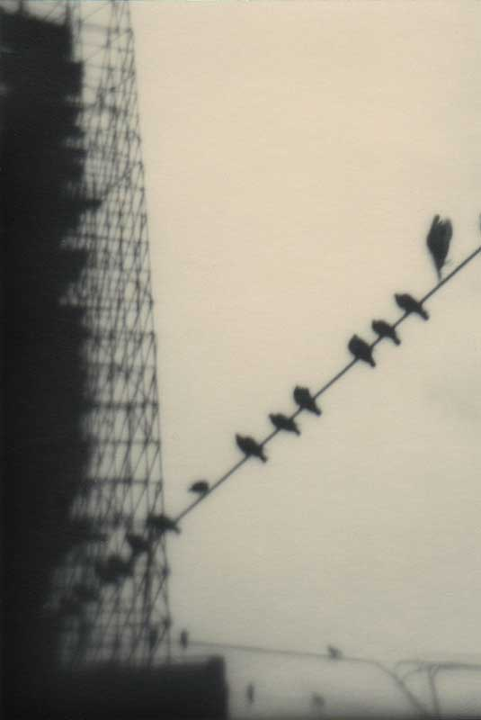 Oiseaux Istanboul