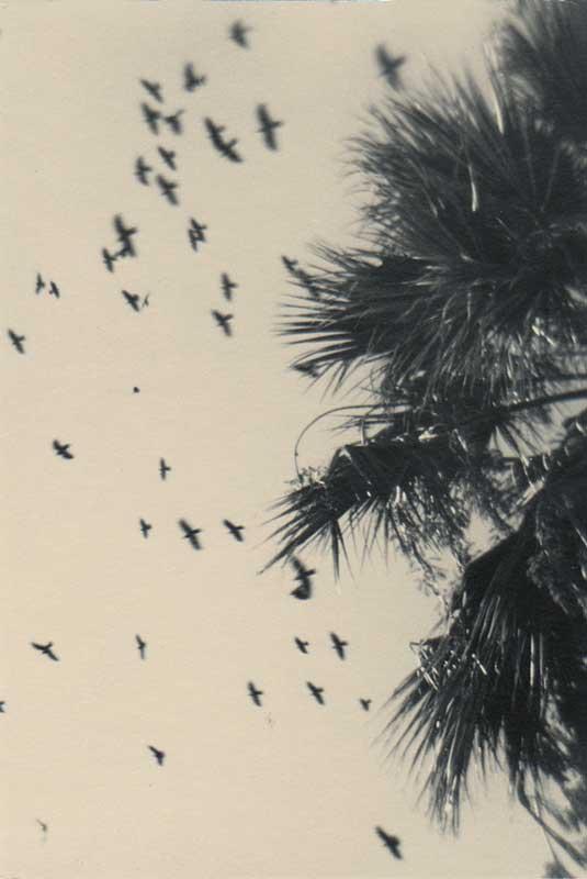 Turquie vol d'oiseaux