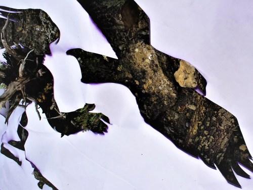 Taming eagle 1 (45x60) Photographie 2/10 sur Dibond et encadrée bois naturel