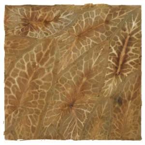 Herbier - Arum Italicum - Jardin du Pouget. 22,5 x 22,5 cm