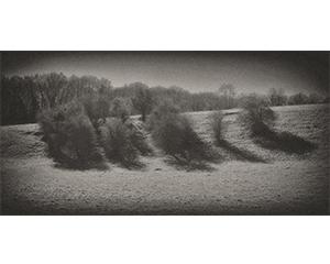 Sans titre, Série Arbres, 2014. Numérique,Tirage encre pigmentaire sur papier coton, 25,6 x 51,2 cm.