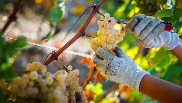 Resultado de imagen de sector vitivinícola