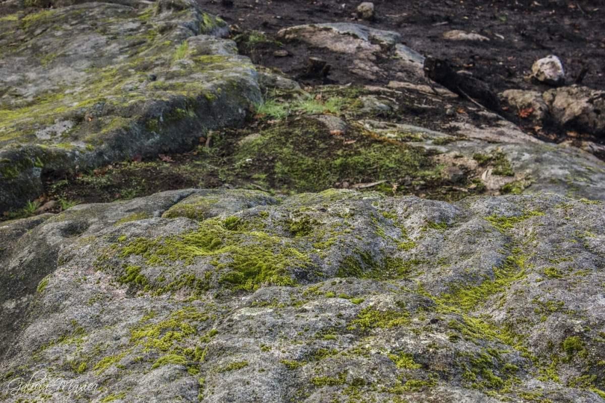 Petroglifos de Couto do Morgallón | GALICIA MÁXICA
