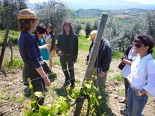 туры и дегустация вин в тоскане