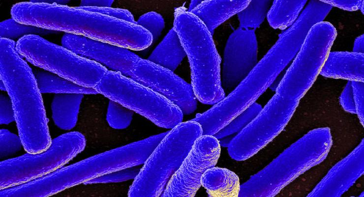 batteri antibiotici