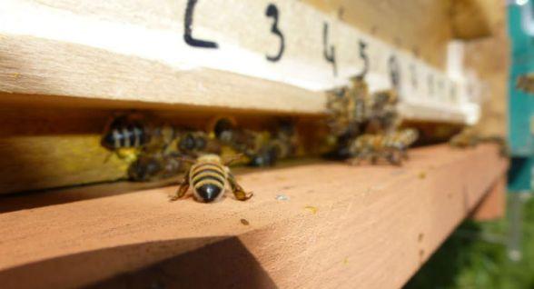 I neonicotinoidi mettono in pericolo l'olfatto delle api