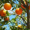 La vitamina C protegge il cervello dall'infiammazione