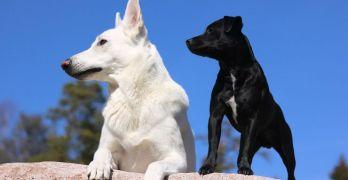 Come sono nate le diverse razze di cani?