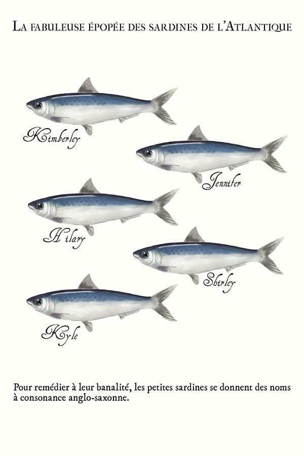 banc de sardines avec des prénoms américains