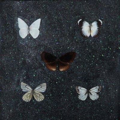 Butterflies VII - Miranda Pissarides