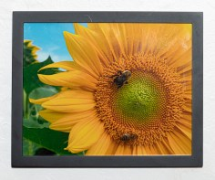 Bee on Sunflower, 2020 Photograph Framed $35.00