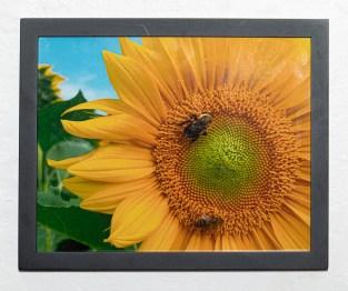 Bee on Sunflower, 2020 Photograph Framed $35.00