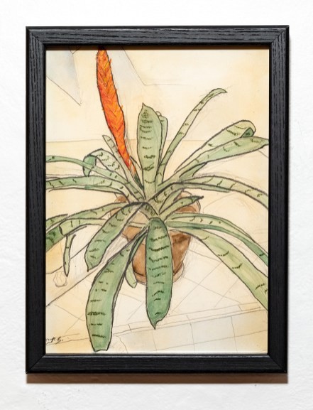 Flaming Sword Bromeliad, 2021 Watercolor, oil pastel & graphite on paper Framed $400.00