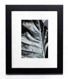 LEAF, 2021 Photograph Matted & framed $75.00