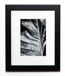 LEAF, 2021 Photograph Matted & framed $75.00