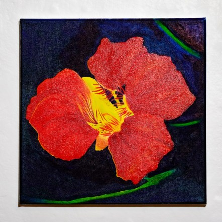Nasturtium in Blue Oil on canvas $300.00