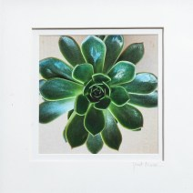 So Succulent, 2021 Photograph Matted & framed $50.00