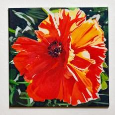 Sun Poppy Oil on canvas $300.00