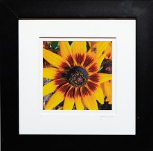There's A Bee, 2021 Photograph Matted & framed $50.00