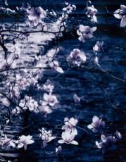 Melissa Santos Magnolias, 2021 Photograph $50