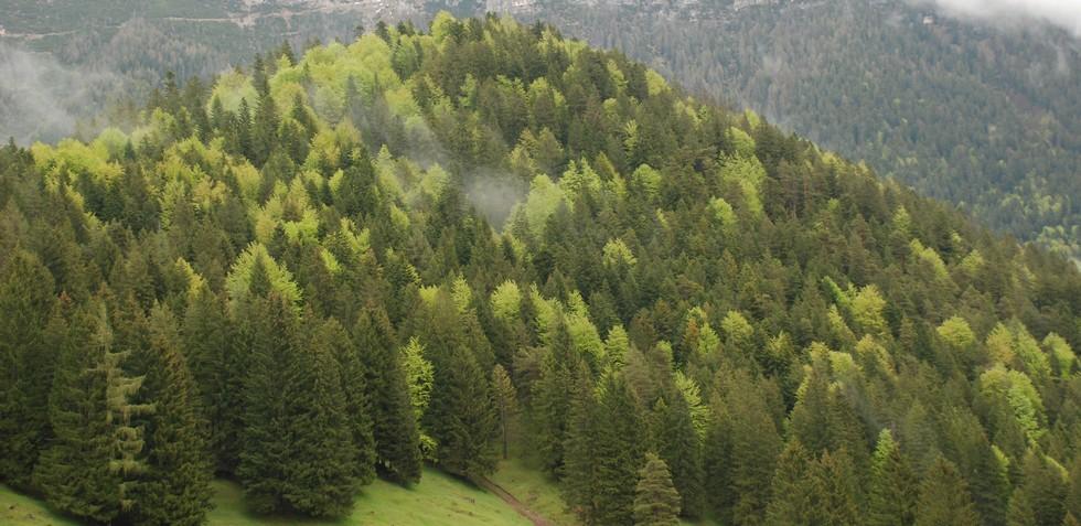 Gallio  Altopiano di Asiago 7 Comuni  Sito Turistico