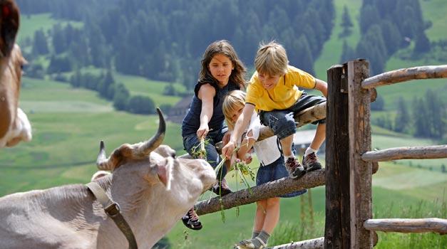 Vacanze per i bambini equitazione in agriturismo  Gallo Rosso